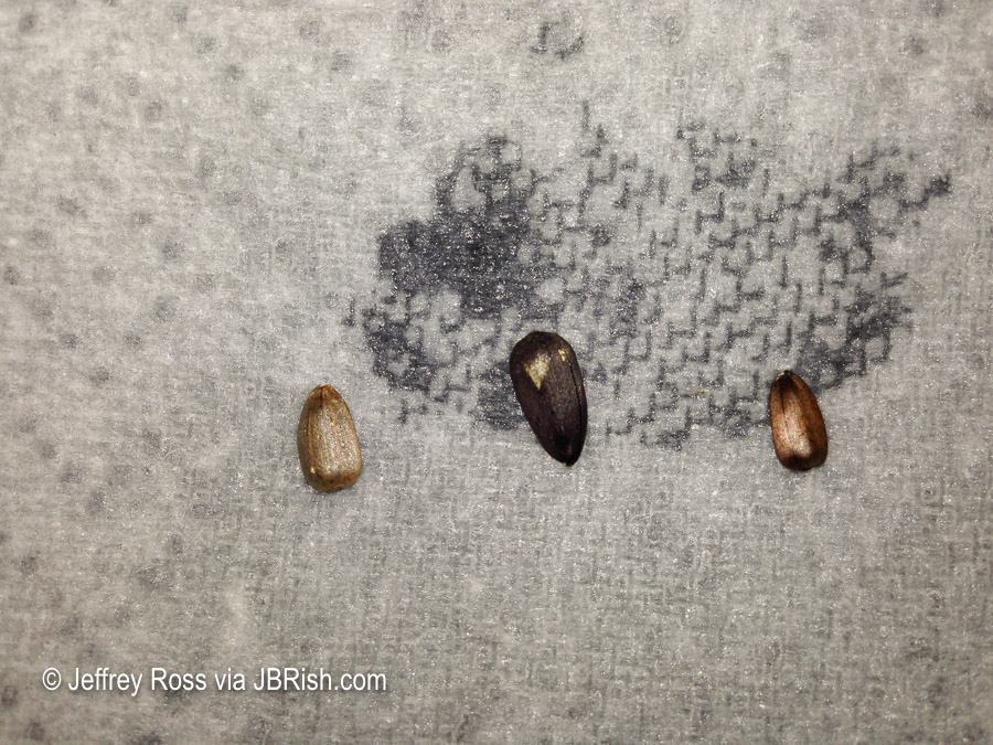 Seeds on wet towel