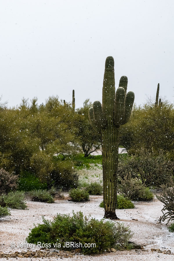 Hail in the Sonoran Desert landscape rocks