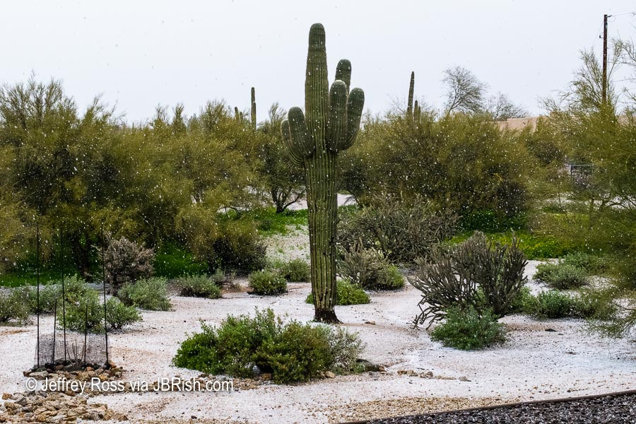 Hail in the Sonoran Desert landscape